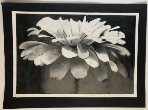 Flower in dark graphite background